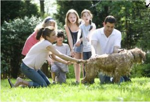 Pet Dander can reduced by washing your pet regularly
